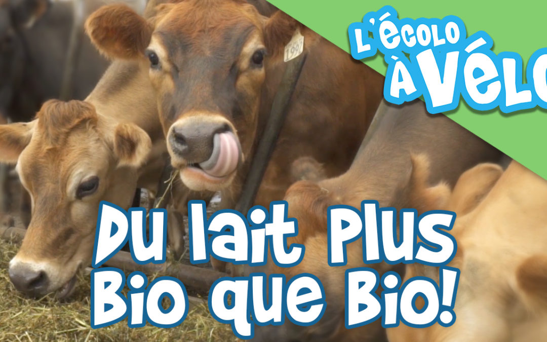 Du lait plus bio que bio